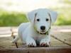 Le marché des animaux de compagnie : les chiffres clés, état des lieux
